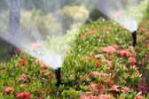 Sprinkler head watering the bush and grass — Stok fotoğraf
