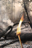 Destroyed by burning tropical forest — Stock Photo