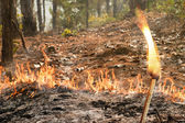 Bushfire in forest ,Thailand — Stock Photo