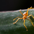 Red ant on leaf — Stock Photo