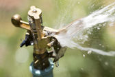 Sprinkler head watering the flowers and grass — Stock Photo