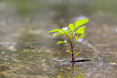 Plant growth from the crack concrete — Stock Photo