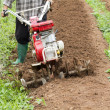 Small rotary cultivator working in garden — Photo