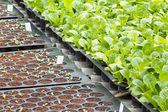 овощной рассады — Стоковое фото