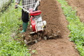 Small rotary cultivator working in garden — Stockfoto