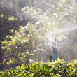 Sprinkler head watering the bush in garden — Stock Photo