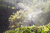 Sprinkler head watering the bush in garden — Stock Photo