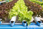 гидропонное огород — Стоковое фото