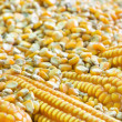 Corn grains for food industry — Stock Photo