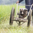 Mowing the Grass in  rice field ,Thailand. — Stock Photo