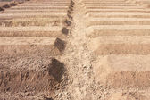 Preparation Of Soil Ready For Planting Vegetable — Stock Photo