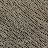 Elephant skin texture — Stock Photo