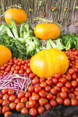 Pumpkins and tomato — Stock Photo