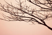 Shape of Silhouette twig in sunrise — Stock Photo