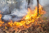 Destroyed by burning tropical forest ,Thailand — Stock Photo