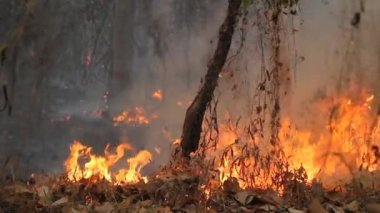 Destroyed by burning tropical forest ,Thailand — Stock Video
