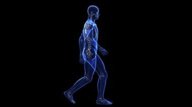 Anatomy: skin and skeleton — Stock Video