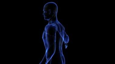 Human body — Stock Video