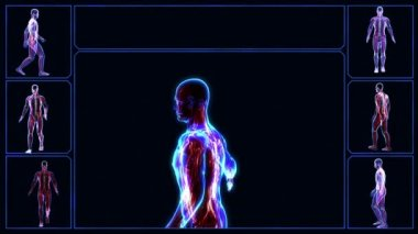 All human body systems. Muscular system highlight. Loop — Stock Video