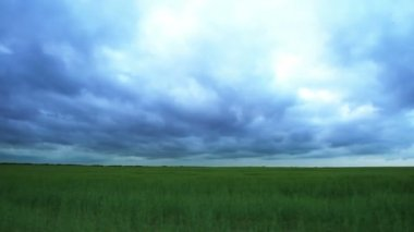 Panorama of green field and sky — Vídeo de stock