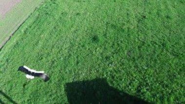 Survol de la cigogne — Vidéo