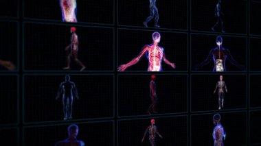 Anatomy of the human body — Stock Video