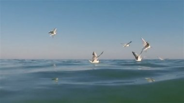 Seagulls — Stockvideo