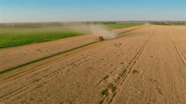 Combine harvesting — Stock Video