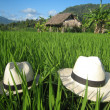 Stock Photo: Hidden backpackers in Bali