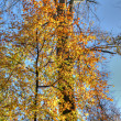 Bright autumn trees in park in Brussels — Foto de Stock