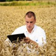 Agriculture scientist in the wheat field — Stock Photo