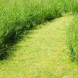 Stock Photo: Pathway on green grass field