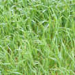 Green grass field close-up image — Stock Photo