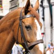 Horse in city — Stock Photo