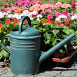 Stock Photo: Green watering-pot on front of flowers in clear bright day
