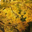 Bright autumn trees in Luxembourg garden in sunny day — ストック写真 #12285669