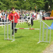 Agility competitions organized by Club Cynologique d'Ile Sainte-Helene runs with his dog during National Day of Belgium — Stock Photo