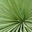 Needles of tropical plant as natural background - Stock Photo