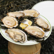 Oysters sold on street in weekend in Belgium are popular between local and tourists — Stock Photo