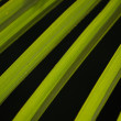 Palm tree leaf close-up as natural background - Stock Photo