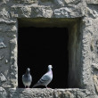 Two pigeons hiding from hot sun in medieval tower — Стоковая фотография