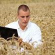 Young agronomist in the wheat field — Stock Photo