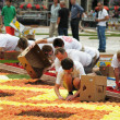 Stock Photo: Unidentified volunteers start to prepare Flower Carpet