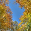 Bright autumn trees in park in Brussels — ストック写真