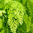 Natural background with leaves of tropical fern - Stock Photo
