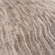 Closeup of dry wood as natural background - Stock Photo