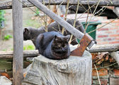 Gloomy scene from urban life - black cat with yellow eyes on piece of wood and axe beside — Stock Photo