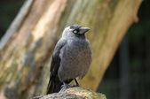 Cute gray bird on natural background — Stock Photo