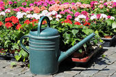 Green watering-pot on front of flowers in clear bright day — Stock Photo