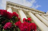 Columns of theater building in Genova with azalea flowers — Stock Photo